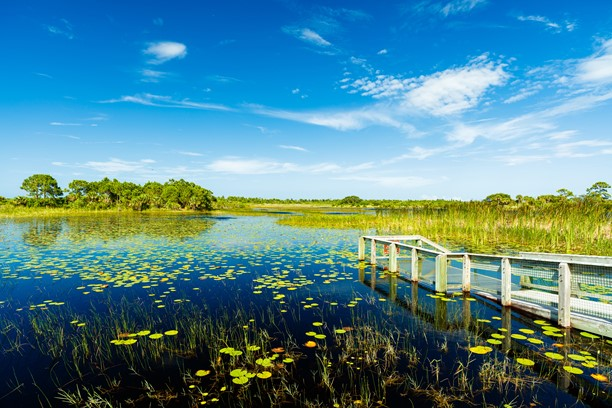 Everglades Environmental Protection